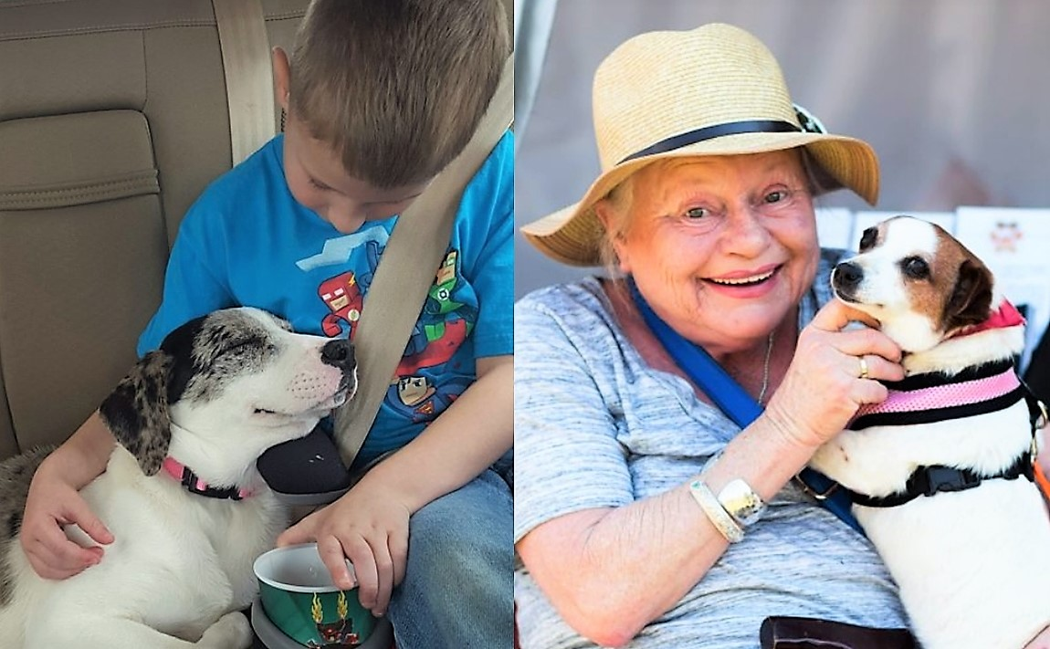 20 Heartwarming Moments Of People And Their Dogs Meeting For The First Time